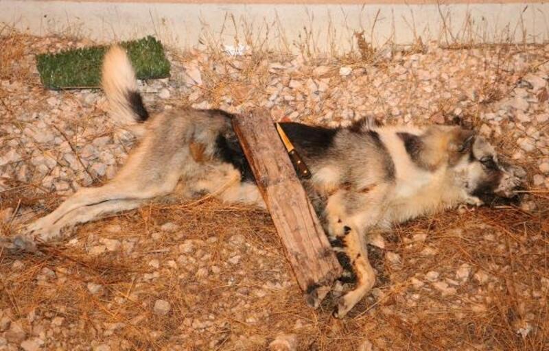 Köpeği öldürüp, bıçağı üzerine bıraktılar
