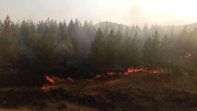 Gaziantep'te ormanlık alanda yangın