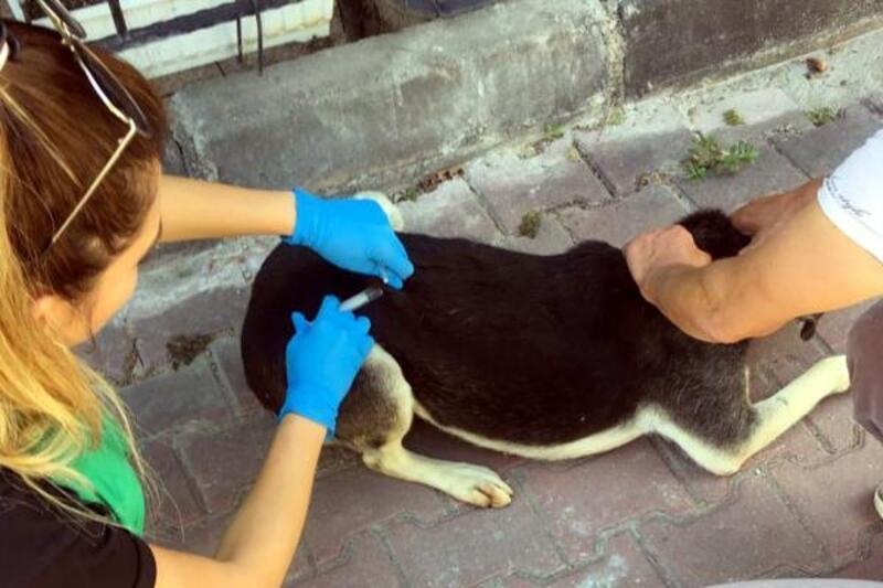 Çankaya Belediyesi, sokak hayvanlarının tedavilerini yapıyor