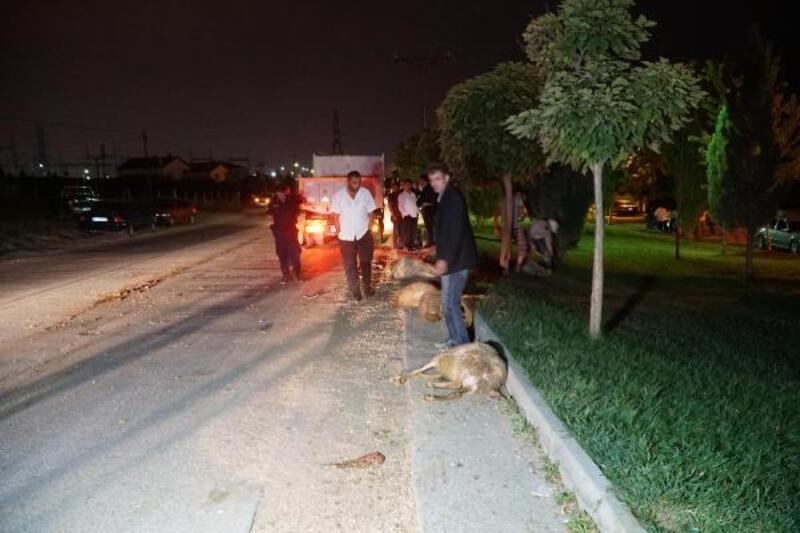 Otomobil koyun sürüsüne daldı: 2 yaralı, 10 koyun öldü