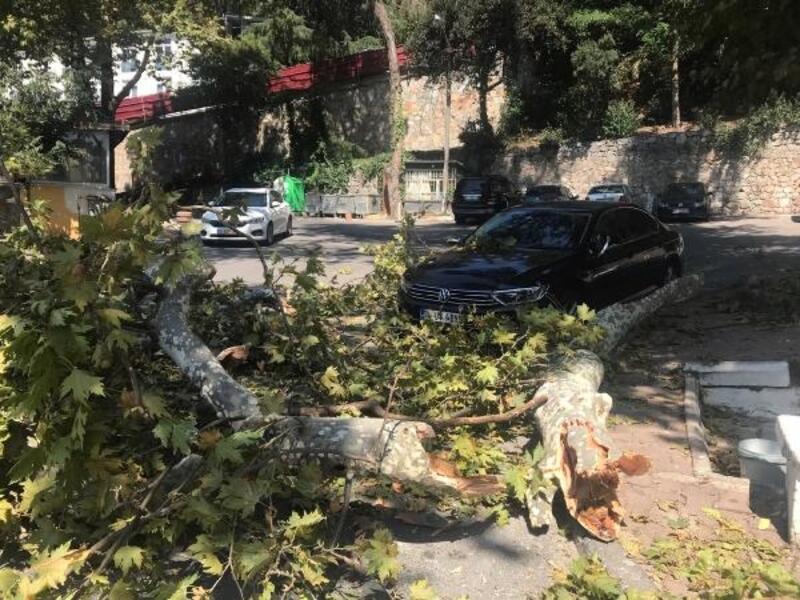 Kartal'da asırlık çınarın dalları otomobilin üzerine düştü