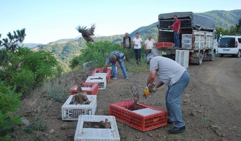 Tokat'ta bin sülün doğaya salındı