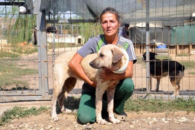 Boğazı kesilip, yola atılan köpek ameliyat edildi