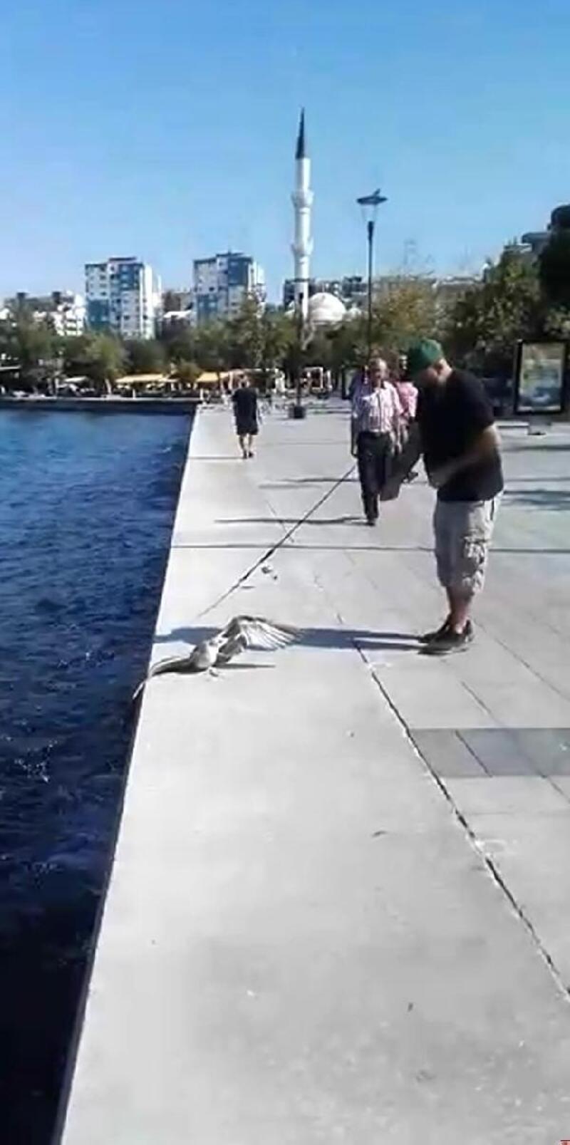 Oltaya balık yerine martı yakalandı
