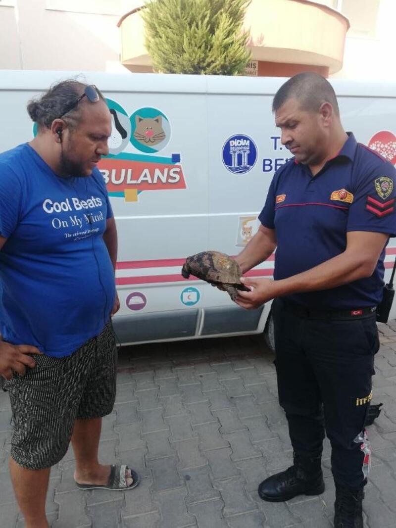 Didim'de makilik alanda çıkan yangında iki kaplumbağadan biri kurtarıldı