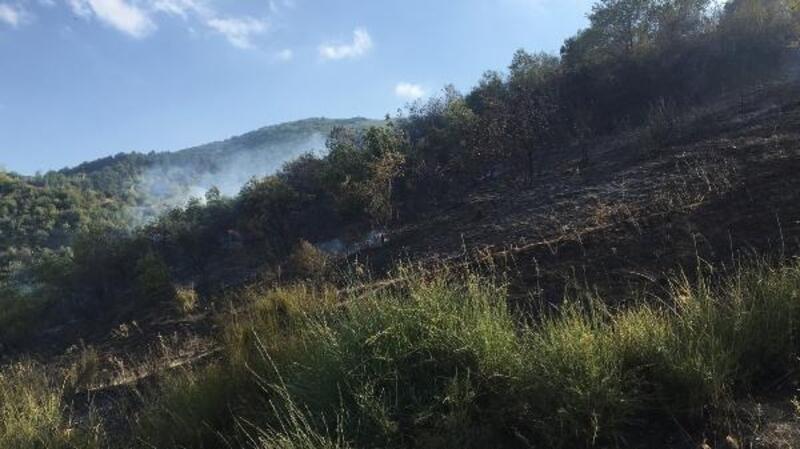 Bursa'da orman yangını büyümeden söndürüldü