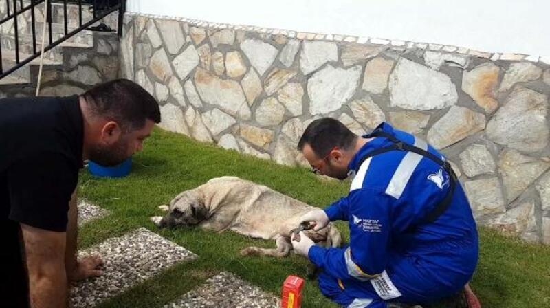 Uyuz hastalığı bulunan köpek tedavi altına alındı