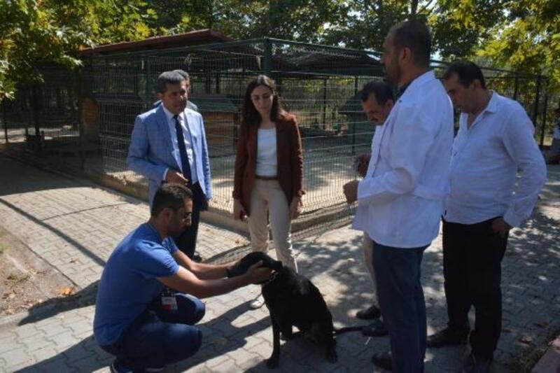 Hayvan barınağından sahiplenilen köpeğe öğrenciler bakacak