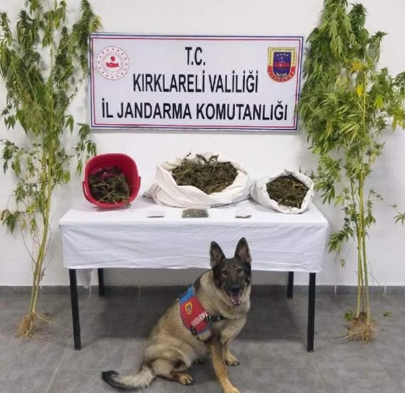 Narkotik dedektör köpek 'İmaj' uyuşturucuya geçit vermedi