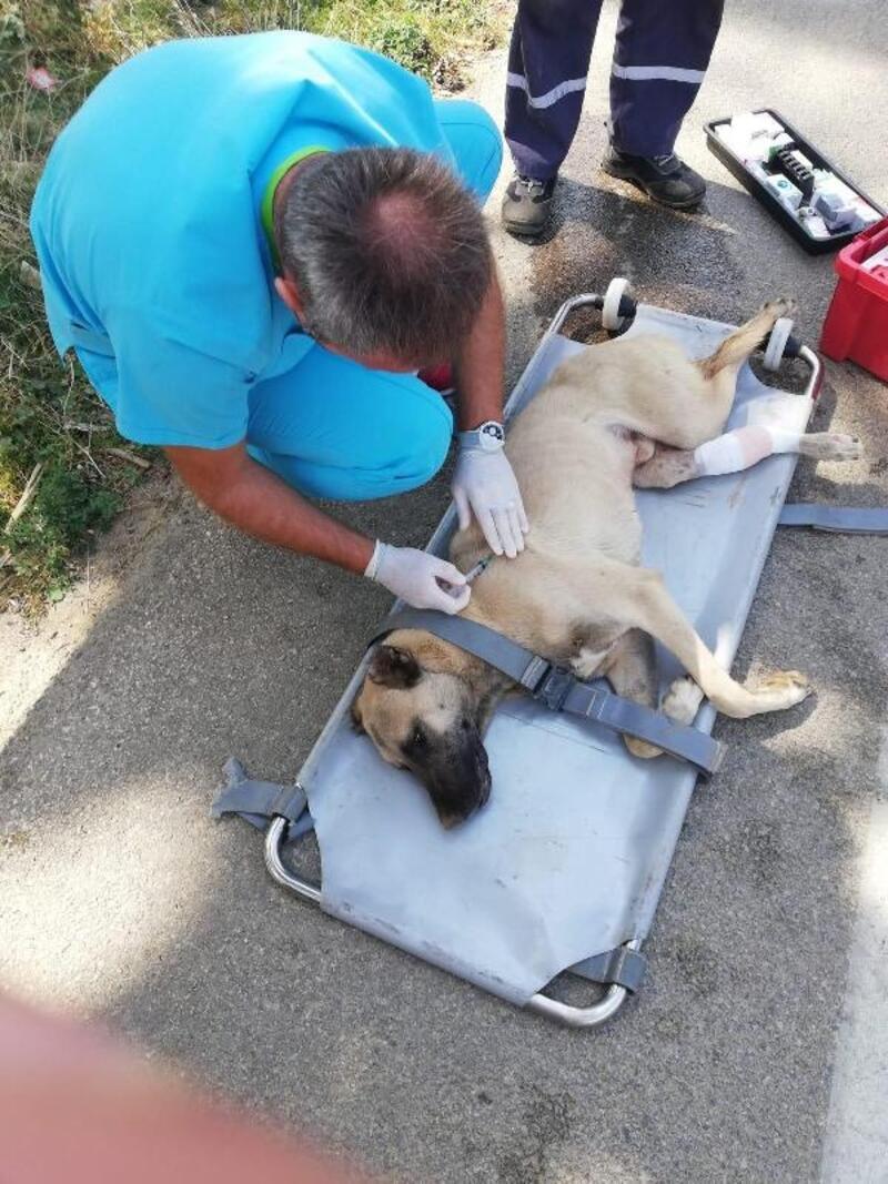 Otomobil çarpan köpek belediye ekiplerince tedavi altına alındı