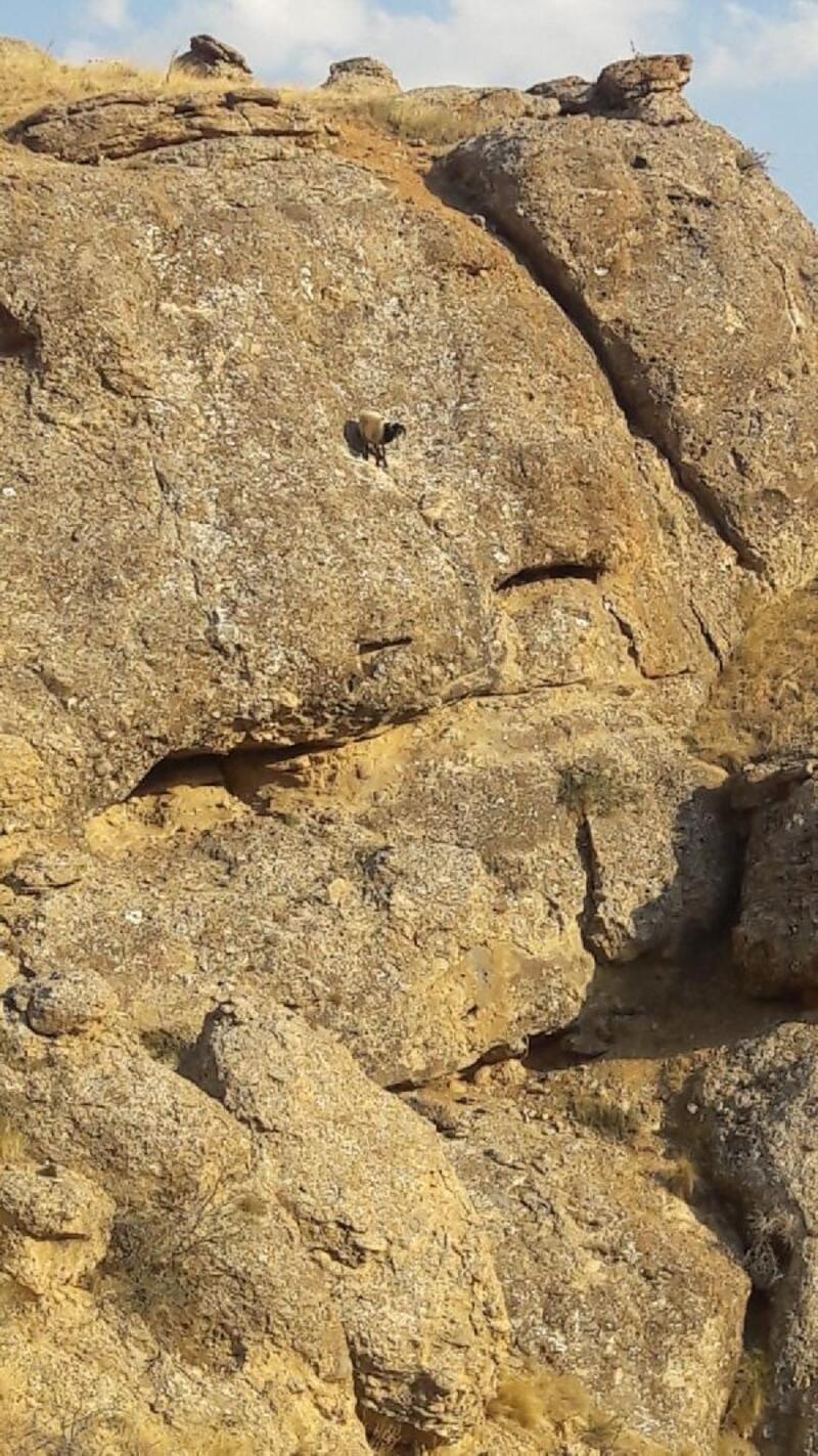 Kurtlardan kaçarak kayalıklarda mahsur kalan koyunu, itfaiye ekipleri kurtardı