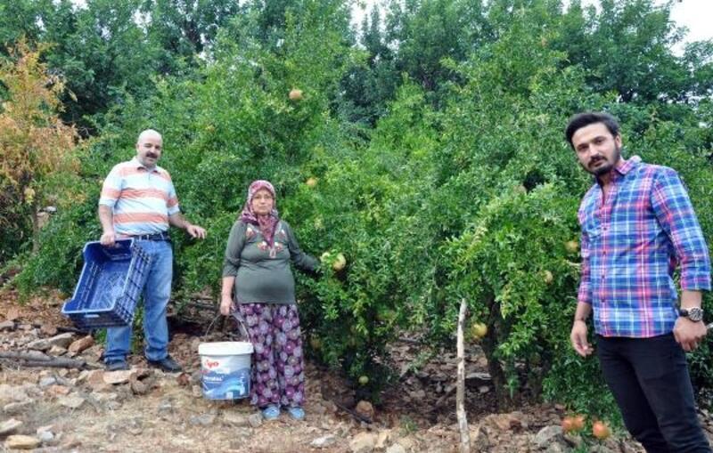 Gazipaşa'da turfanda çekirdeksiz nar hasadı