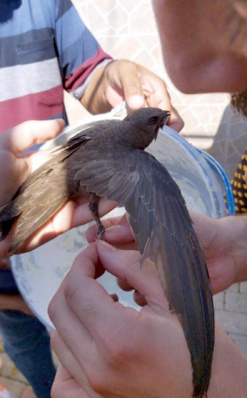 Çatıda sıkışan ebabil kuşunu itfaiye kurtardı
