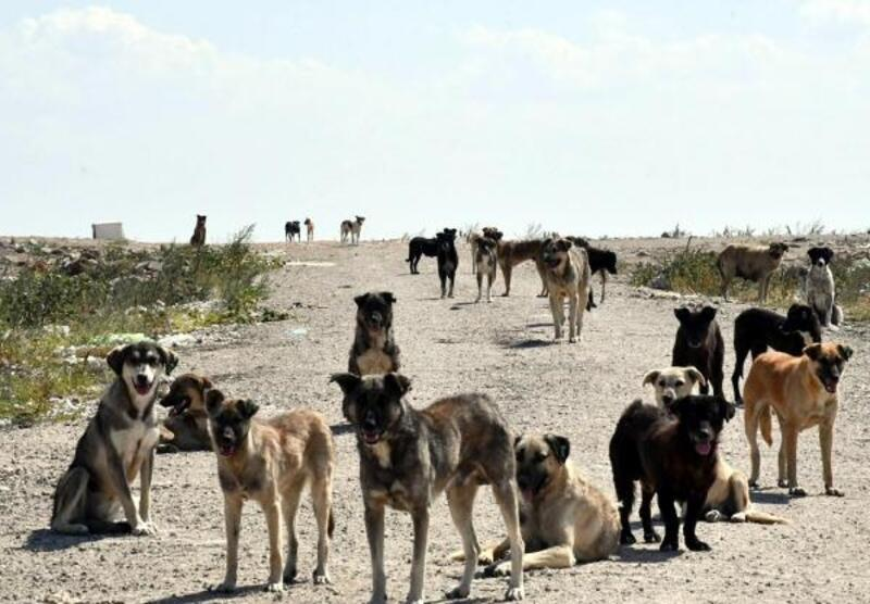 Kırklareli'de 10 bin kedi ve köpeğe kuduz aşısı yapıldı