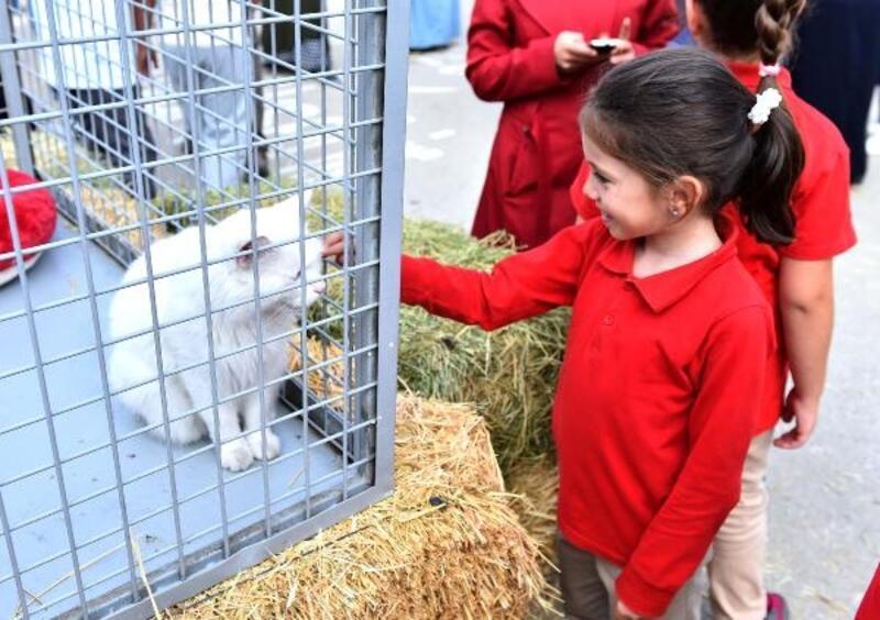 Büyükşehir Belediyesi'nden 'Hayvanları Koruma Günü' etkinliği