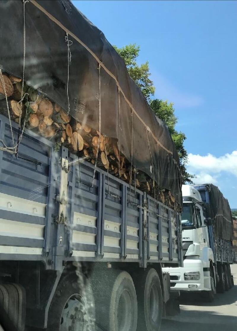 Ormanda kaçak kesim iddiasına 6 tutuklama