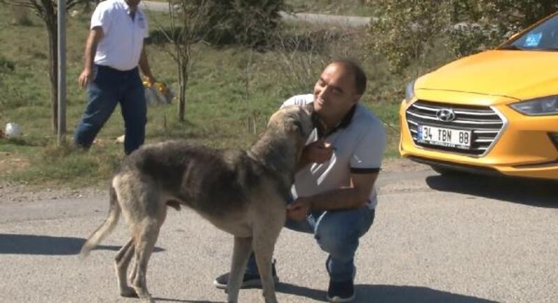 Sabiha Gökçen Havalimanı'nda görevli taksiciler sokak hayvanlarını elleriyle besledi
