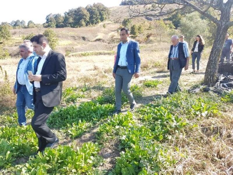 """Orhangazi Mahmudiye'ye """"Çilek Alım Merkezi"""" kurulacak"""