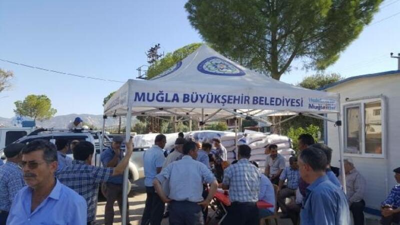 Muğla Büyükşehir'den besiciler için yem bitkisi desteği