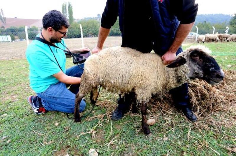 Yenişehir'de hayvan yetiştiricilerine gebelik testi uyarısı
