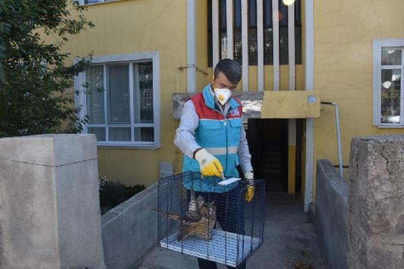 Yaralı baykuş tedaviye alındı