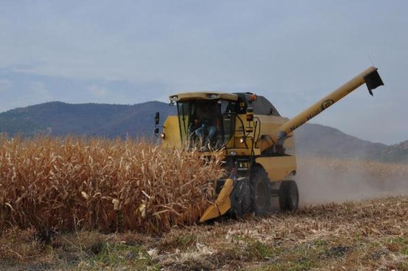 İslahiye ve Nurdağı'nda mısır hasadı başladı