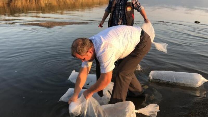 İznik gölüne 6 bin adet yavru yayın balığı bırakıldı