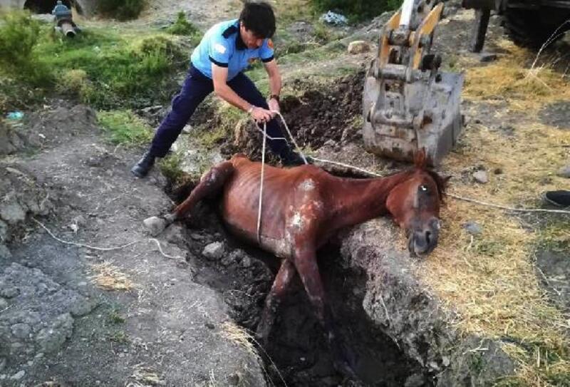 Çamura saplanan atı itfaiye kurtardı