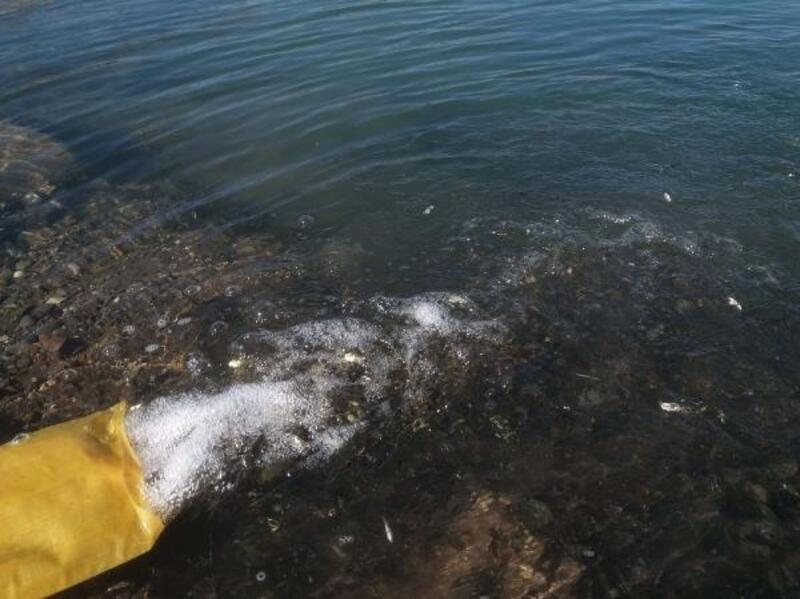 DSİ Çat barajına yavru balık bıraktı