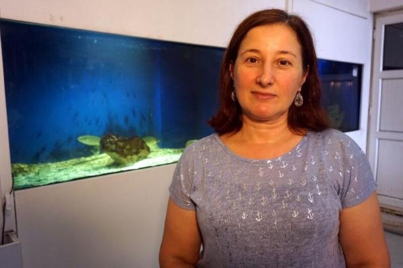 Uzmanlar balon balığıyla mücadele istedi… Turizme de zarar verir, avlanarak ekosistemden çekilmeli