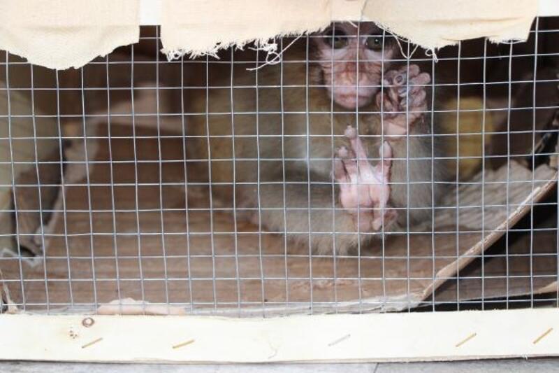 Sınır kapısında ele geçirilen maymunlar yeni yuvalarında