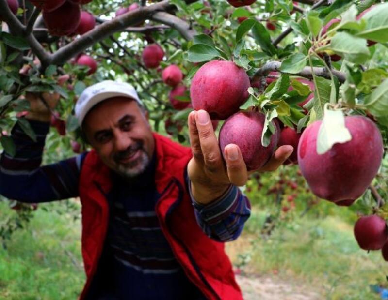 Van'dan Kuzey Irak'a 'en güzel elma' ihracatı