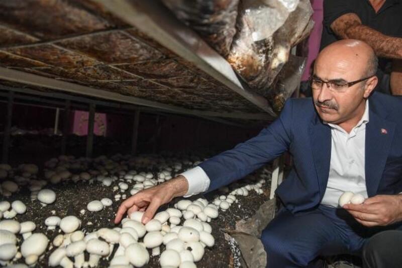 Vali Demirtaş, mantar üretim tesisini ziyaret etti