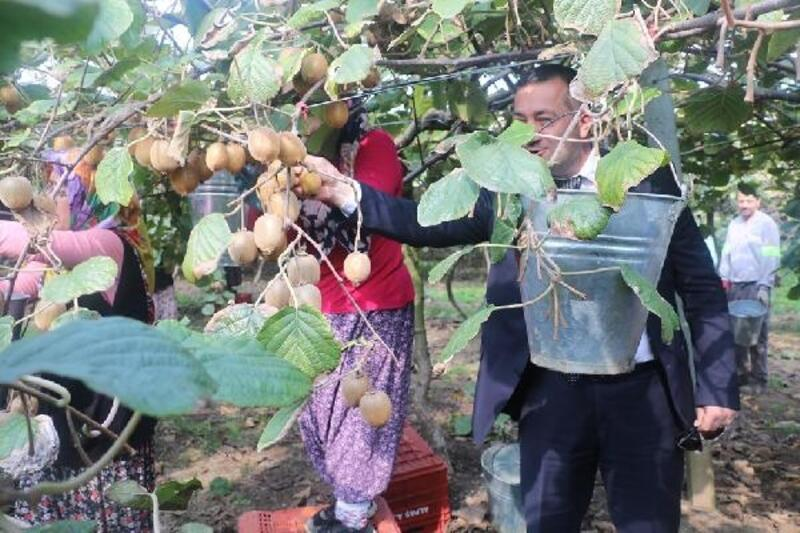 Başkan Canbay'dan kivi hasadına destek
