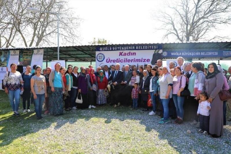 Muğla Büyükşehir'den 40 kadın üreticiye toplam 120 kıl keçisi desteği