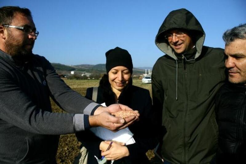 Yenişehir'deki deneme ekimlerinden başarılı sonuçlar alınıyor