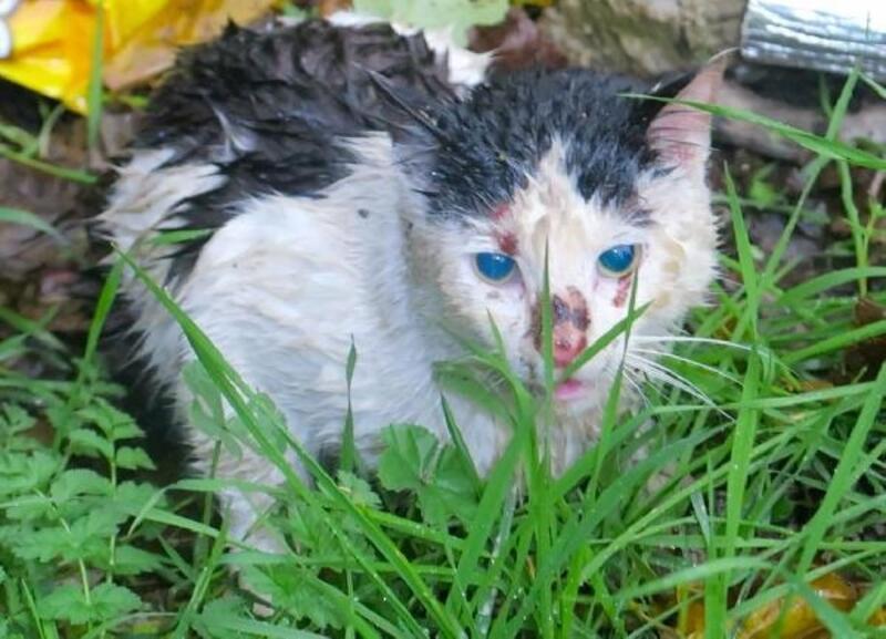 Yaralı kedi tedaviye alındı