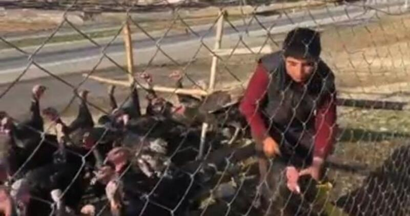 Nurdağı'nda hindiler satışa çıktı