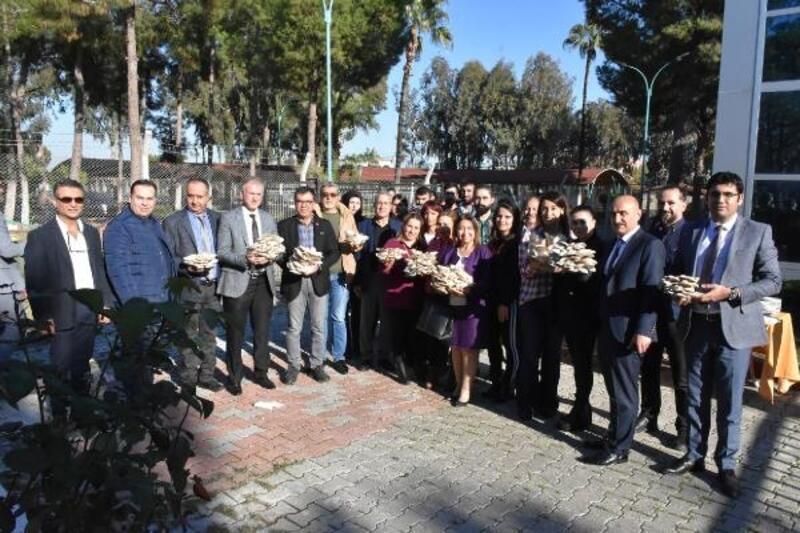Tarsus'ta mantar hasadı
