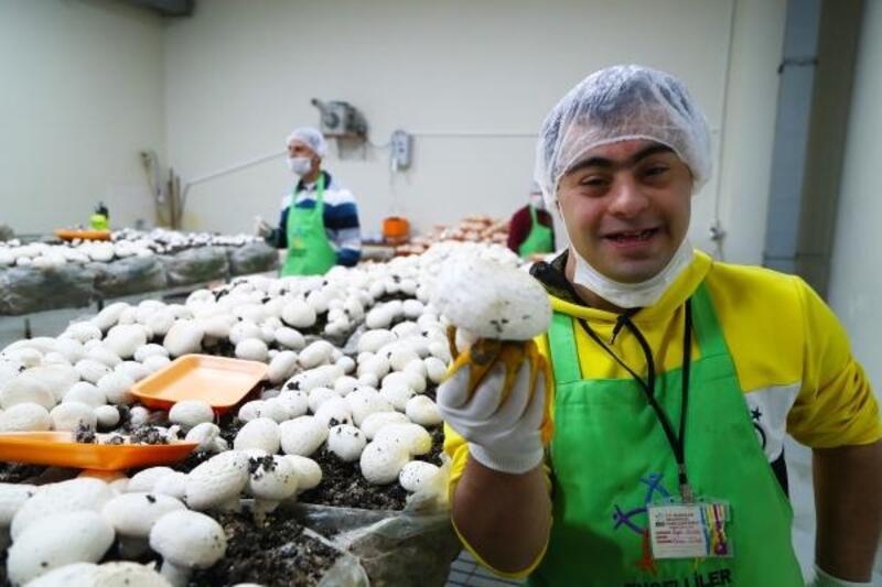 Engelli gençler mantar üretimine başladı, hedef 1.5 ton