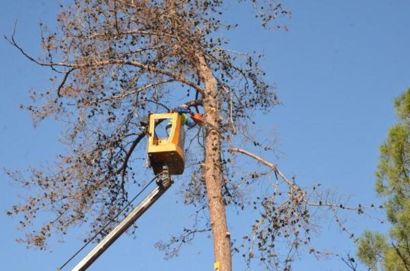 Tarsus'ta tehlike arz eden ağaçlar kesiliyor
