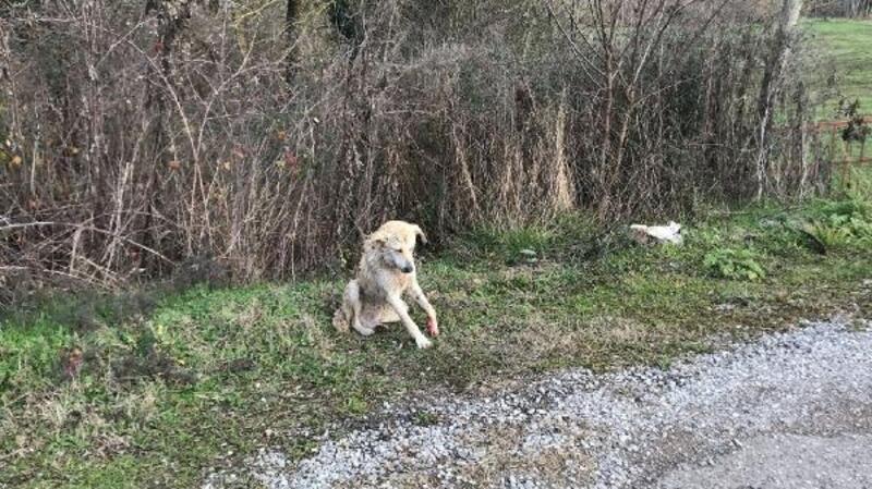 Jandarma yaralanan köpeğin tedavisini sağladı