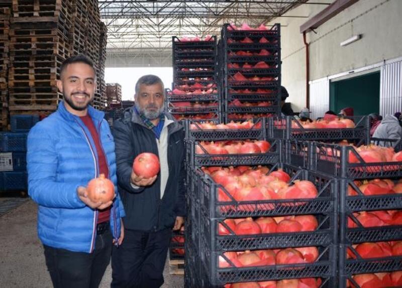 Korkuteli'de nar ihracatı başladı