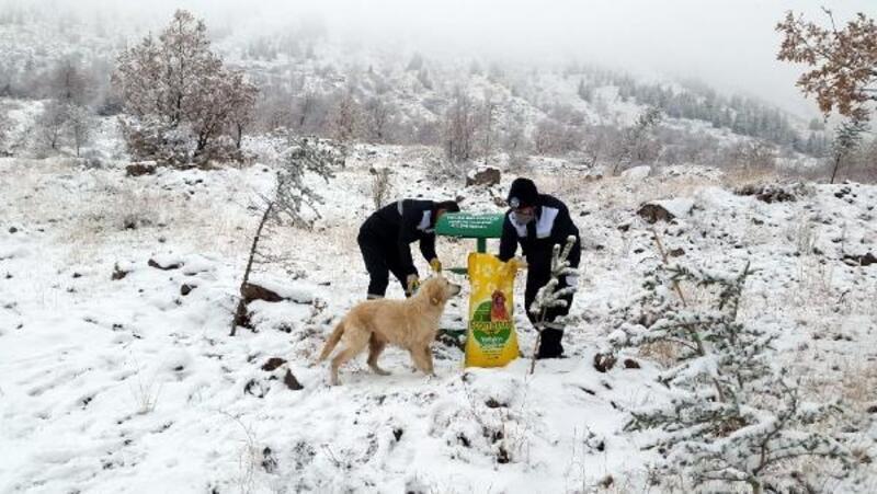 Talas Belediyesi'nden hayvanlar için yem