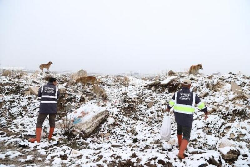 Karda aç kalan hayvanlara yiyecek bırakıldı