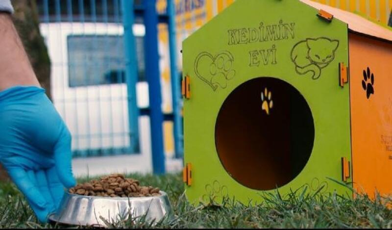 Sultangazi Belediyesi, kedileri yuva sahibi yapıyor