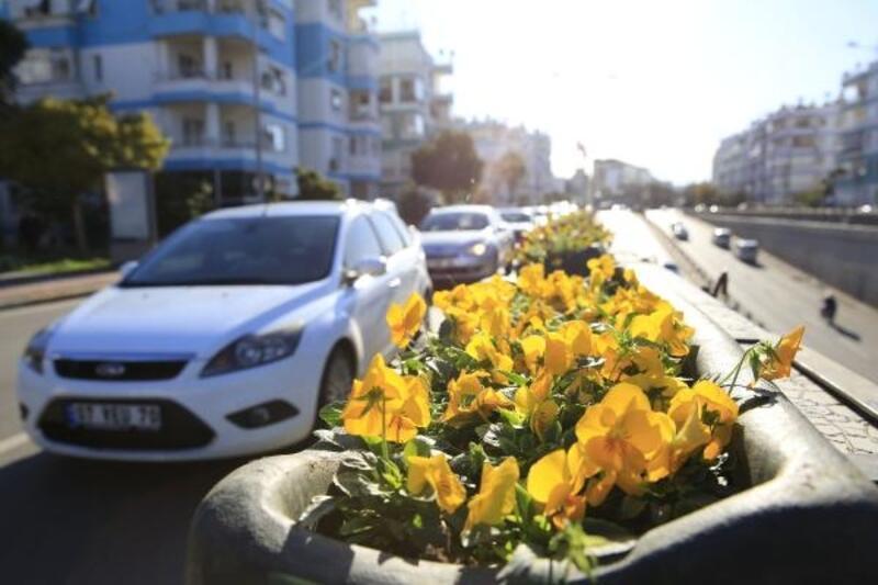 Köprülü kavşaklar çiçekle süslendi