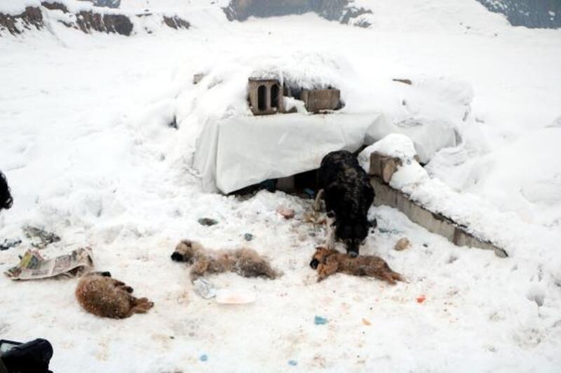 Yüksekova'da dondurucu soğuklar: 3 yavru köpek öldü