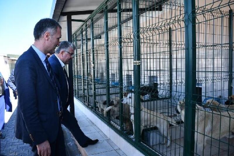 İnegöl Belediyesi 2019 yılında 2 bin 790 hayvanı sağlığına kavuşturdu