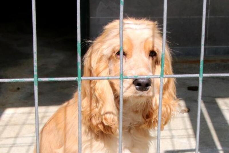 478 hayvan sahiplerince bırakıldı